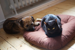 The Dogs Bed