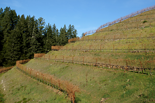terraces-at-Fisher